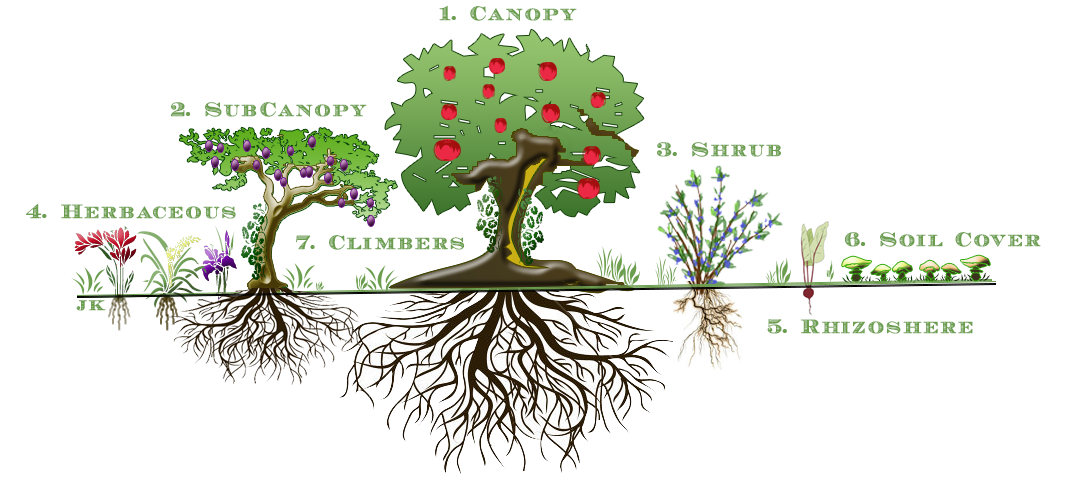 Figure 1: The Seven Layers of a Food Forest Garden